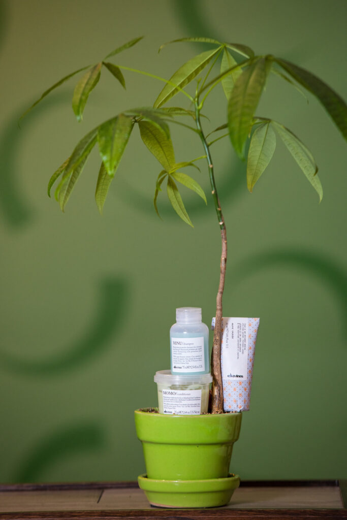 the-attractivators-davines-plant